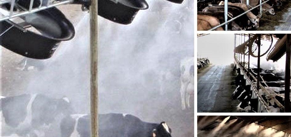Çiftlik Hayvanı Soğutma Serinletme